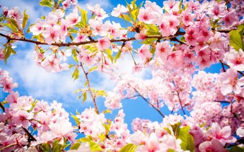 Read more about the article Le printemps bat son plein chez Mouton Rose !